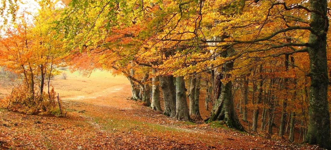 Autumn_in_Italy